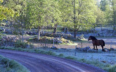 Åsens Cup – tävling i brukskörning med häst