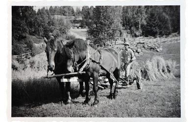 Slåtter med häst